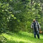 Jornadas Micológicas Primaverales en la Villa de Borau