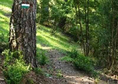 Las sendas recorren por antiguas trochas de madera durante buena parte del recorrido