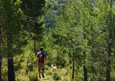 """Bajando por el cerro, la senda se torna más """"mediterránea, más calurosa, por ello es mejor realizar el camino en la dirección recomendada."""